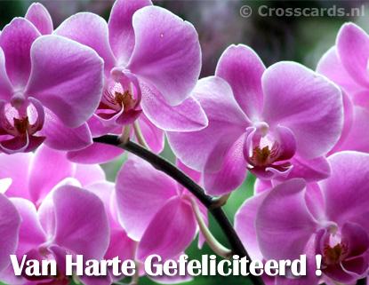 gratis christelijke datingsite Zwolle