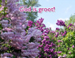 God is groot 1